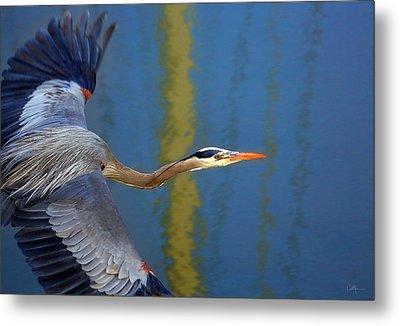Bay Blue Heron Flight Metal Print by Robert Bynum