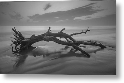 Beach Bones Metal Print by Debra and Dave Vanderlaan