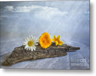Beach Treasures Metal Print by Veikko Suikkanen