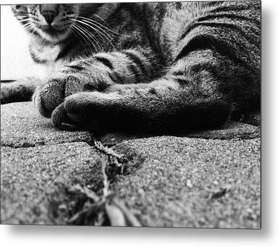 Beast Metal Print by Lucy D