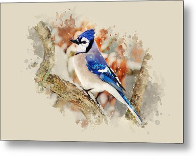 Beautiful Blue Jay - Watercolor Art Metal Print by Christina Rollo