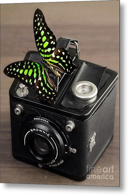 Beautiful Butterfly On A Kodak Brownie Camera Metal Print by Edward Fielding