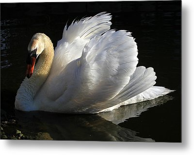 Beautiful Display Metal Print by Donna Kennedy