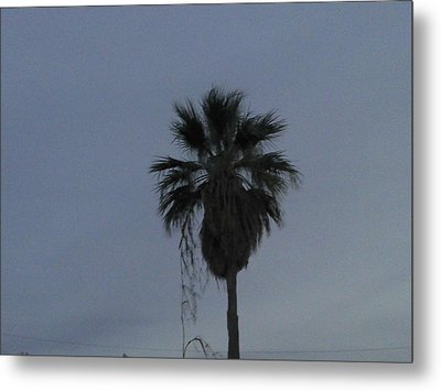 Beautiful Palm Tree Metal Print by Rebekah Luper