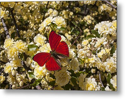 Beautiful Red Butterfly Metal Print by Garry Gay
