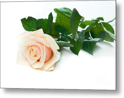 Beautiful Rose On White Metal Print by Michal Bednarek
