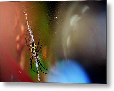 Beautiful Spider Metal Print by Adam LeCroy