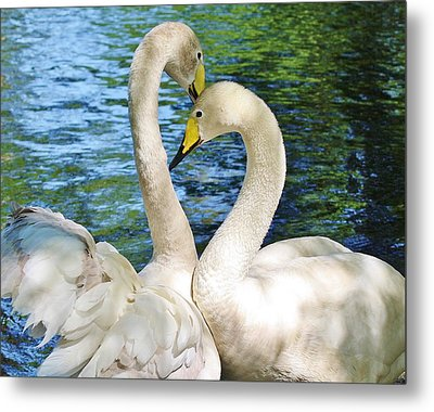 Beautiful Swans Metal Print by Paulette Thomas