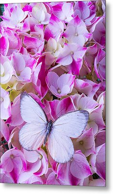 Beautiful White Butterfly Metal Print by Garry Gay