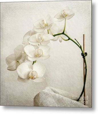 Beautiful White Orchid II Metal Print by Hannes Cmarits