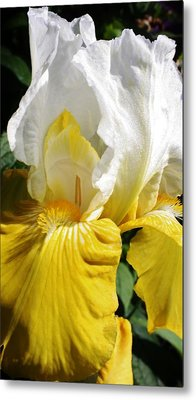 Beauty For The Eye Metal Print by Bruce Bley