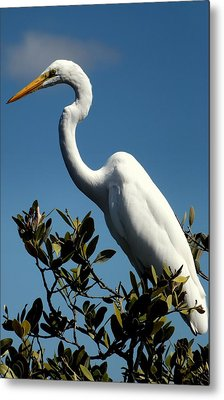 Beauty Of Sanibel Metal Print by Karen Wiles
