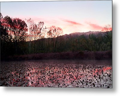Beaver Marsh Metal Print by David Yunker