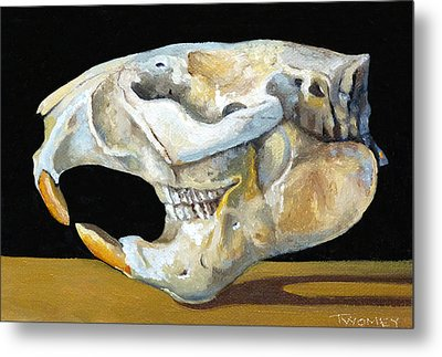 Beaver Skull 1 Metal Print by Catherine Twomey