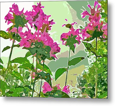 Bee Balm Metal Print by Jean Hall