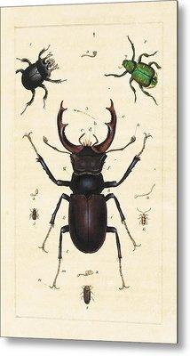 Beetles Metal Print by King's College London