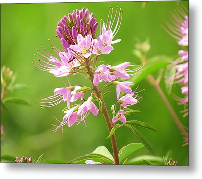 Beeweed . . .with Ant Metal Print by  Feva  Fotos