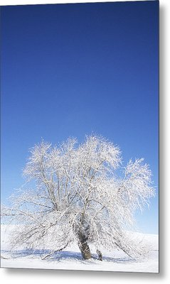 Before The Thaw Metal Print by Latah Trail Foundation