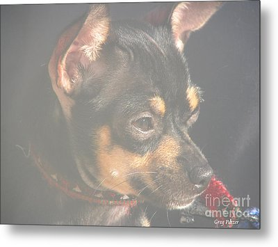 Bella Metal Print by Greg Patzer