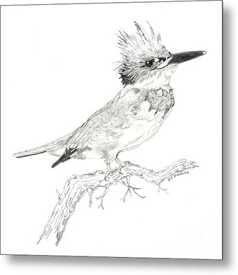 Belted Kingfisher Metal Print by Donald Koehler