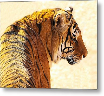 Bengal Tiger In Thought Metal Print by JAXINE Cummins