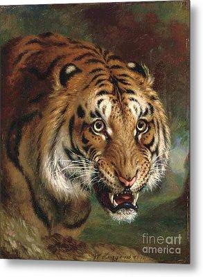 Bengal Tiger Metal Print by Pg Reproductions