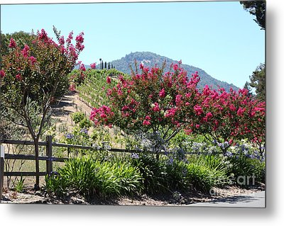 Benziger Winery In The Sonoma California Wine Country 5d24493 Metal Print by Wingsdomain Art and Photography