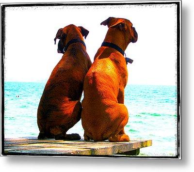 Best Friends Dog Photograph Fine Art Print Metal Print by Laura  Carter