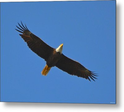 Best Soaring Bald Eagle Metal Print by Jeff at JSJ Photography