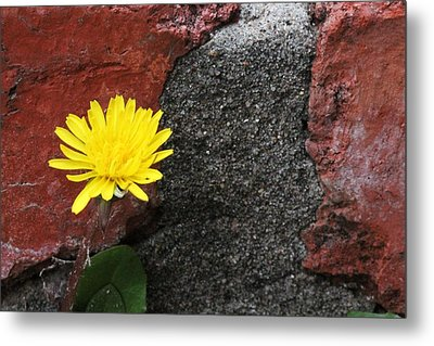 Between The Rocks And A Hard Place Metal Print by Lorri Crossno