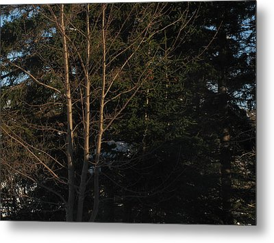 Between The Trees Metal Print by Adam Smith