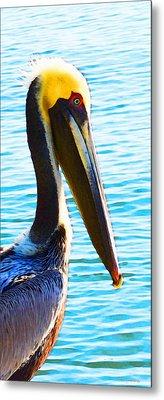 Big Bill - Pelican Art By Sharon Cummings Metal Print by Sharon Cummings