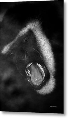 Big Yawn From This Monkey Metal Print by Thomas Woolworth