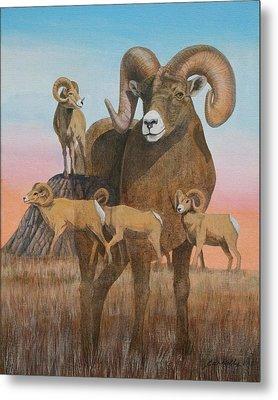 Bighorn Ram Study 2011 Metal Print by J W Kelly