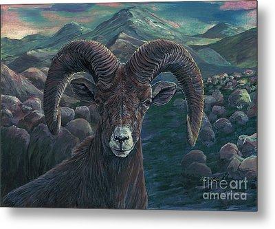 Bighorn Sheep Metal Print by Tom Blodgett Jr