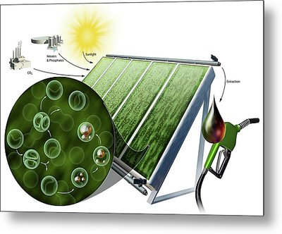 Biofuel From Algae Metal Print by Nicolle R. Fuller
