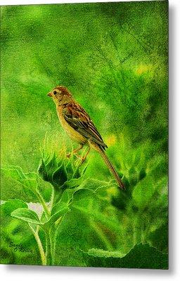 Bird In A Sunflower Field Metal Print by Sandi OReilly