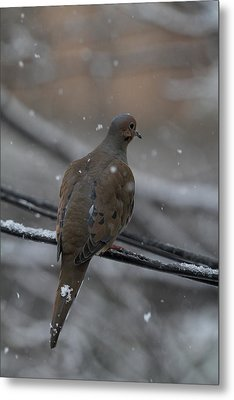 Bird In Snow - Animal - 01134 Metal Print by DC Photographer