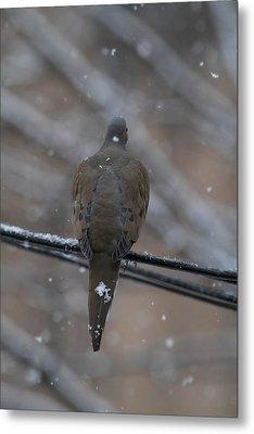 Bird In Snow - Animal - 01135 Metal Print by DC Photographer