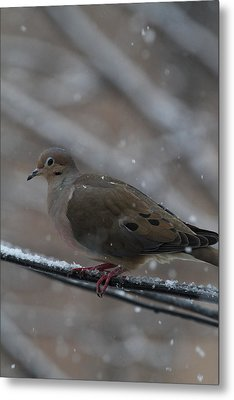 Bird In Snow - Animal - 01136 Metal Print by DC Photographer