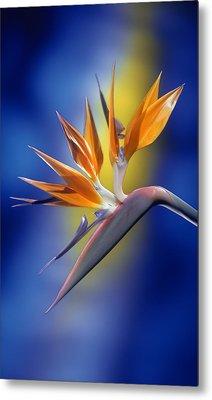 Bird Of Paradise Metal Print by Kirk Ellison