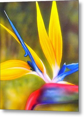 Bird Of Paradise Revisited Metal Print by Darren Robinson