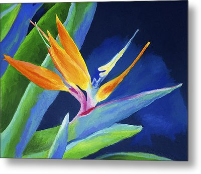 Bird Of Paradise Metal Print by Stephen Anderson