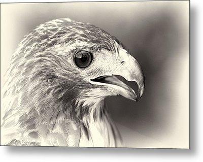 Bird Of Prey Metal Print by Dan Sproul