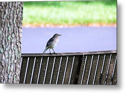 Bird On Bench Metal Print by Aimee L Maher Photography and Art Visit ALMGallerydotcom
