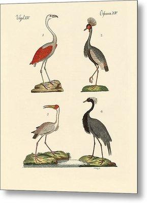 Birds From Hot Countries Metal Print by Splendid Art Prints