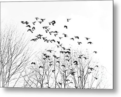 Birds Metal Print by Kevin Barske