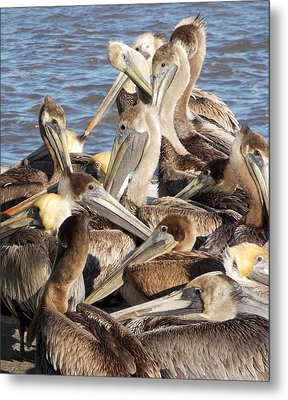 Birds Of A Feather Metal Print by John  Glass