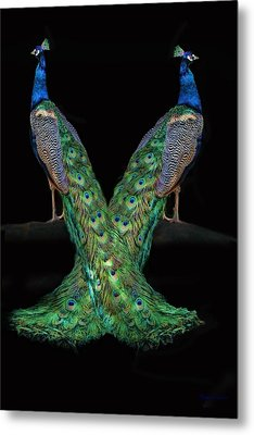 Birds Of A Feather Metal Print by Stephanie Laird