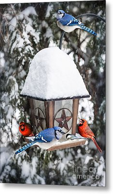 Birds On Bird Feeder In Winter Metal Print by Elena Elisseeva
